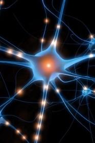 Neuronas-para-I-Phone[1]
