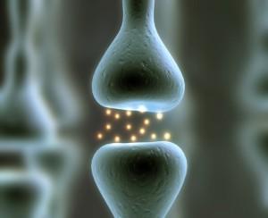 conexion-sinaptica